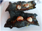 squid ink crisps